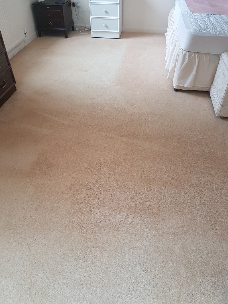 Dirty pet footprints removed after deep cleaning.